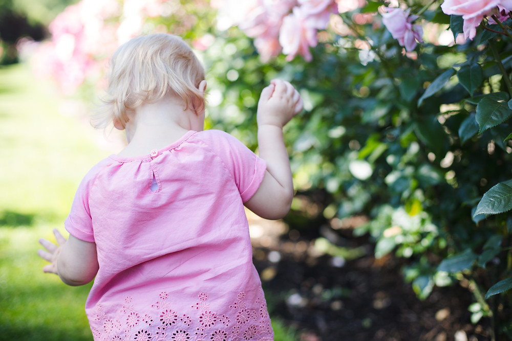 Rose Garden Family Session | Portland Family Photographer