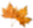 Falling-Autumn-Leaves-Transparent-Backgr