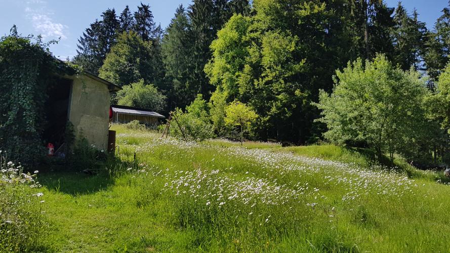 1900 m² Garten laden auch zum Löcher in die Luft gucken ein.