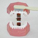 Large Toothbrush (Nissen)
