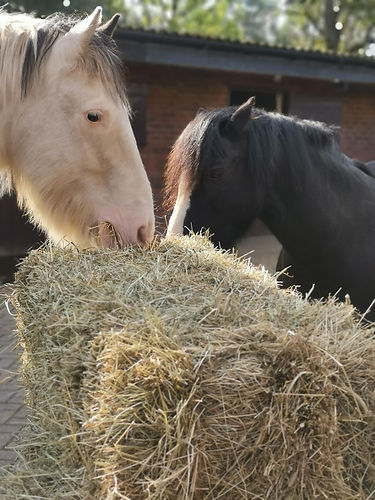 Jake and Bobby with hay bale.jpeg