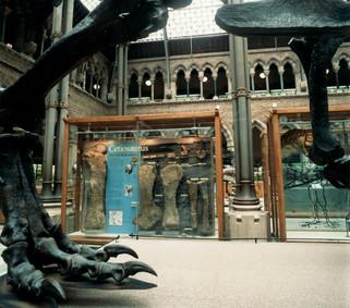 OXFORD-Museum_000.jpg