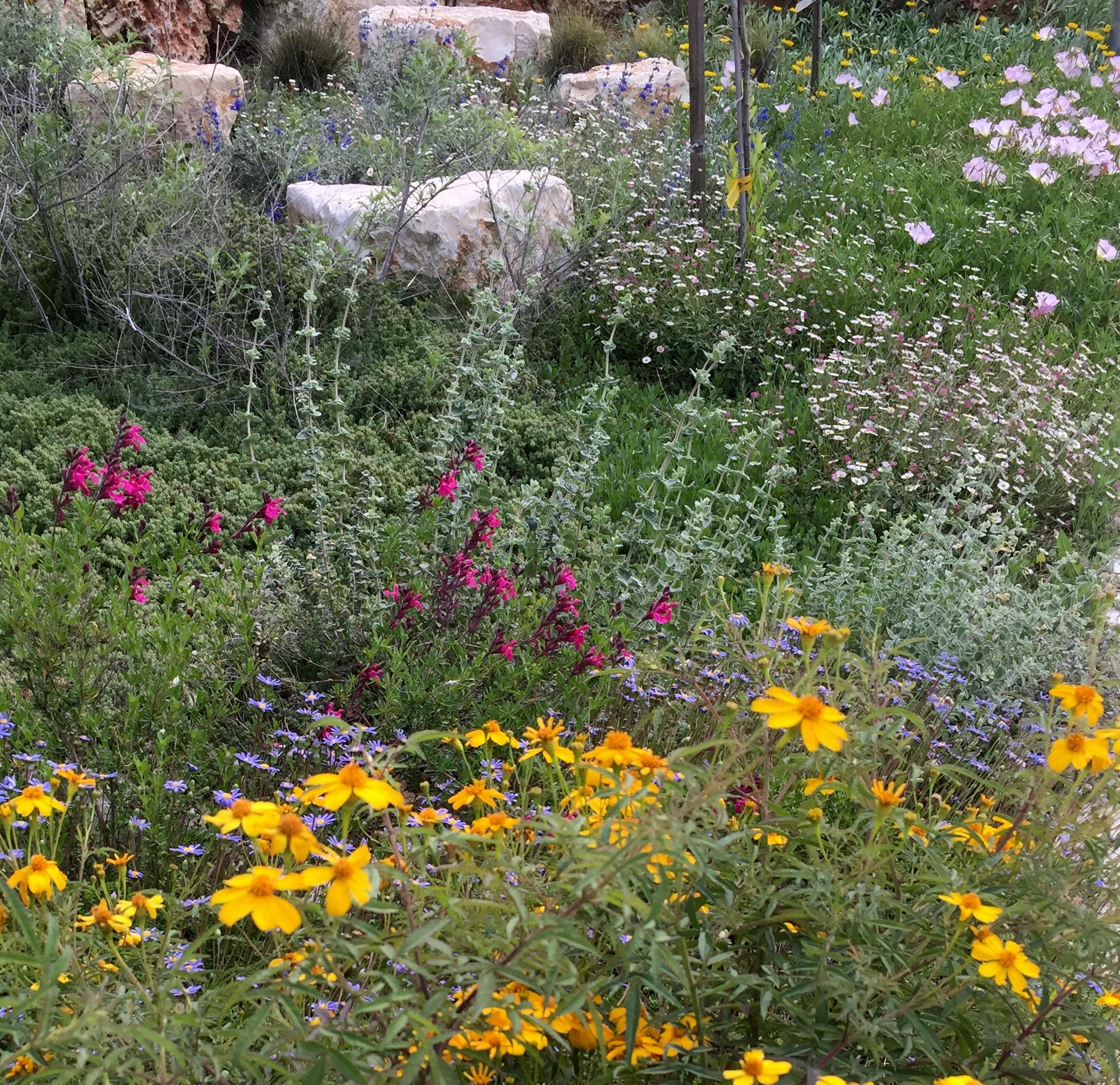 גינת פרפרים וצמחי בר ברמות מנשה