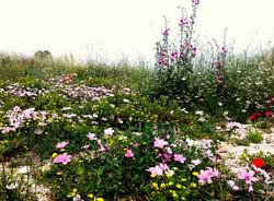פריחת אביב השראה.jpg