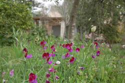 פרחי בר בשטח פתוח בגן