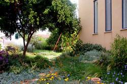 גינת פרפרים שופעת בכניסה לבית