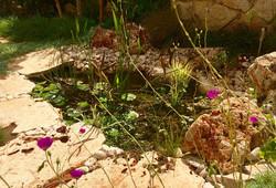 בריכת דגים משולבת בתוך משטח אבן