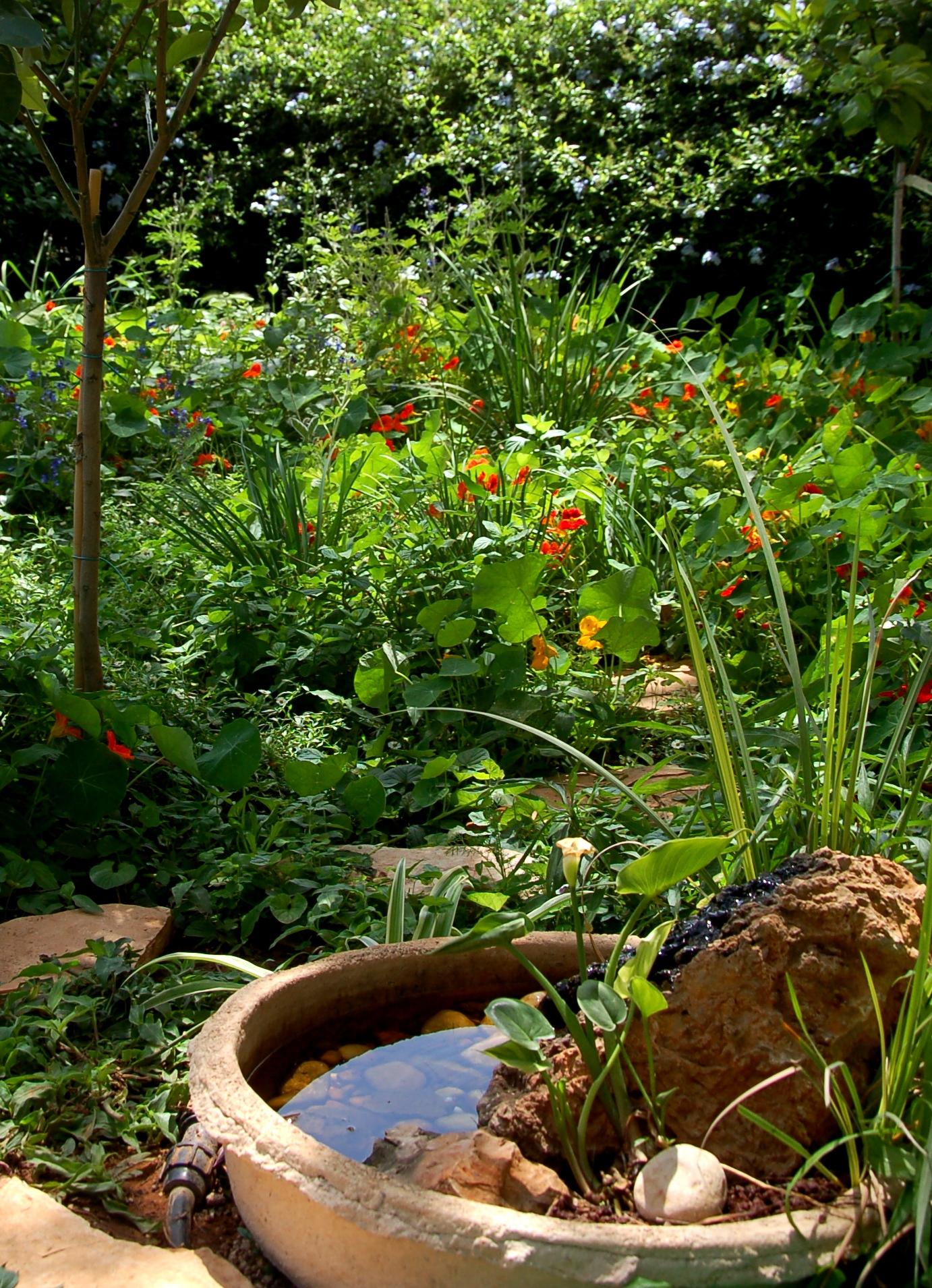 אובייקט מים בגינה אקולוגית