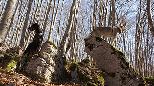 balade canine 46
