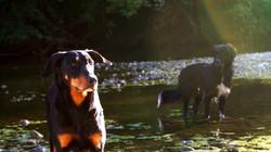 éducation canine Occitanie
