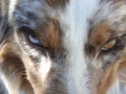 dressage chien Lot