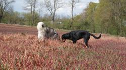 dressage chien éducation chien Lot