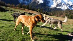 dressage chiens Occitanie