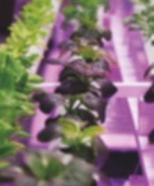 Nutriled LedScene Horticultura Luminaria