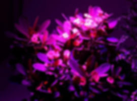 1pcs-lot-24w-36w-horticulture-e27-led-gr