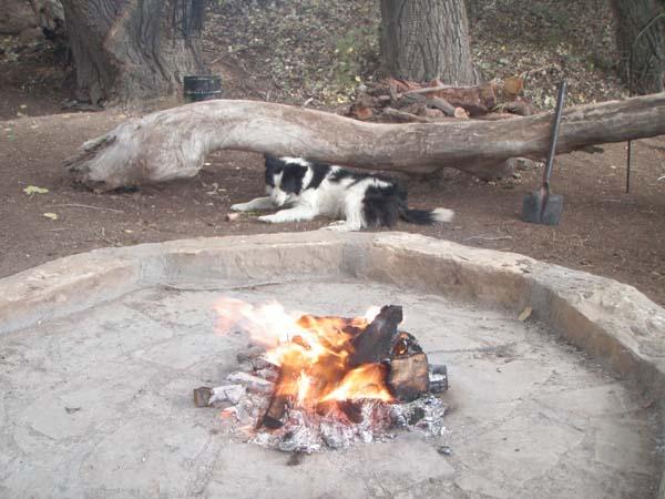 Hond & vuur