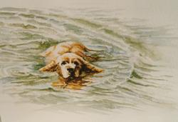 A quick swim