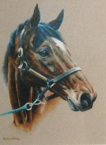 Equine portrait
