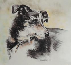 Terrier look