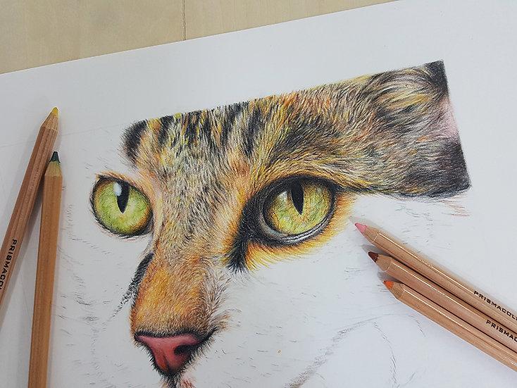 素描+色鉛筆繪畫班《我的寵物》