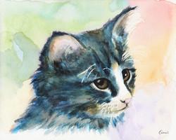 A Pitiable Kitten