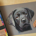 BlackDogPastel.jpg