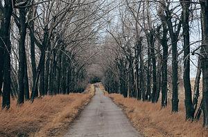 road-1246601_1920.jpg