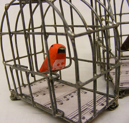 Robin In Bird Cage