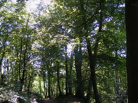 Beechwood path.