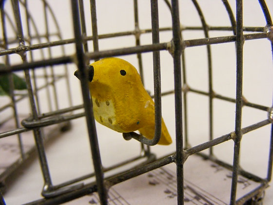 Canary In Bird Cage