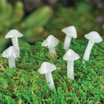 Glow Mushrooms (7pcs)
