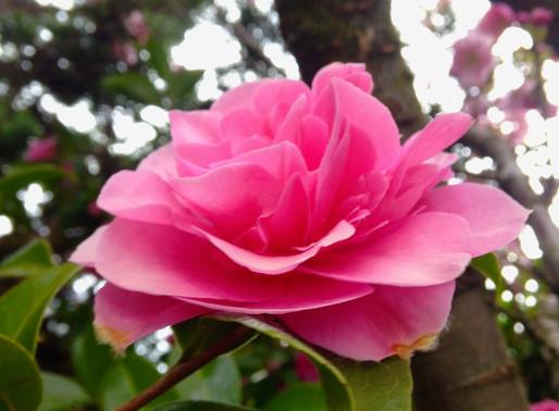 Gentle Day - Tree Teaching