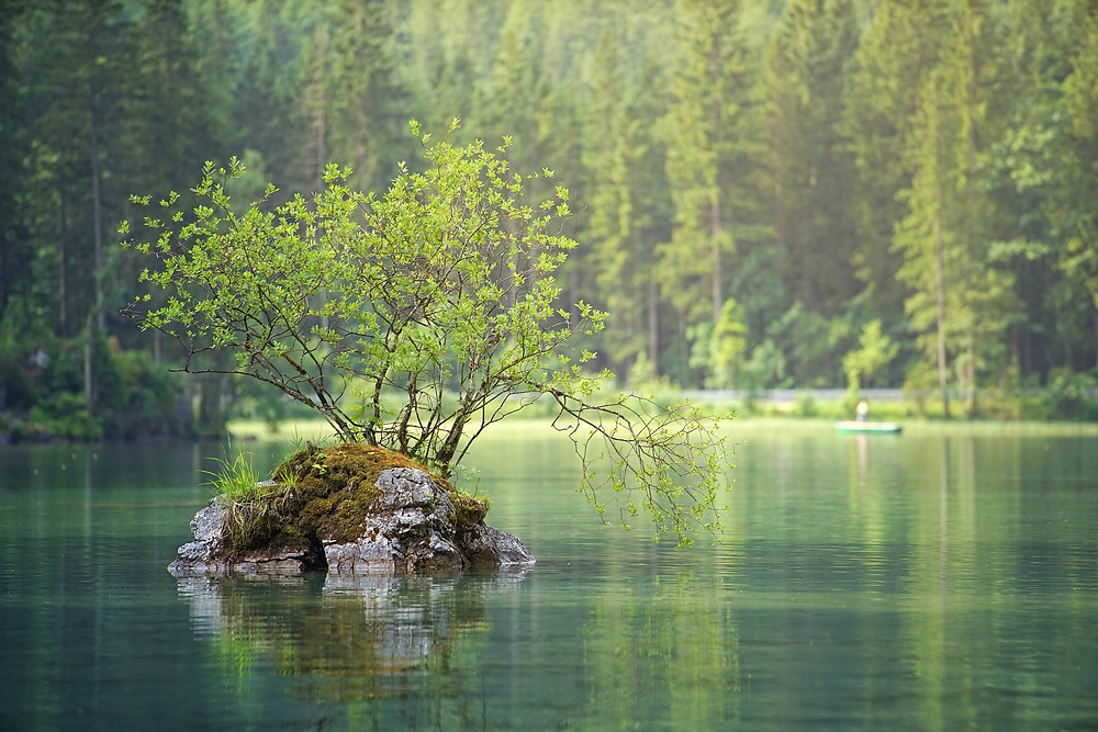 Gren forest and island in calm lake