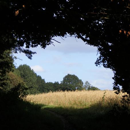 A September Walk