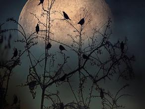 Tree Blessings On Dark Days