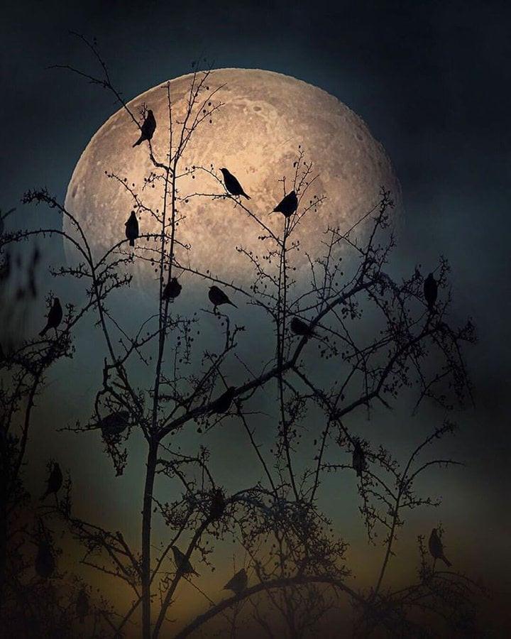 Yule Moon