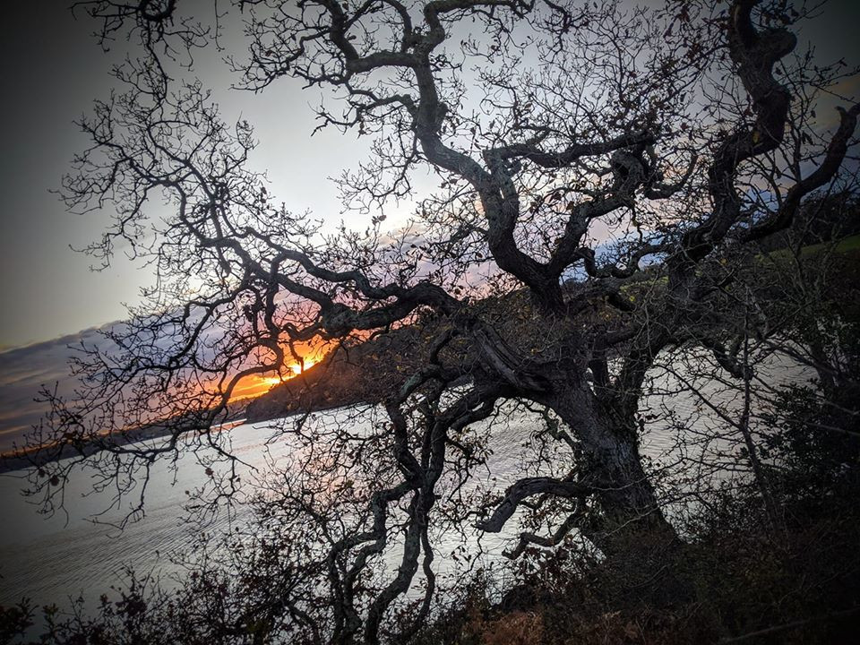 Oak Tree winter solstice