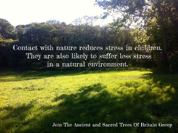Trees mean less stress for kids - Ancien