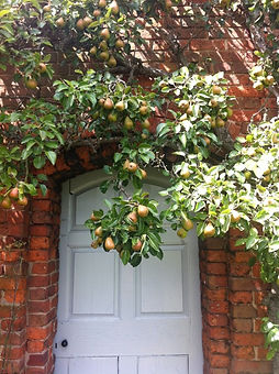 Pears by the door.jpg