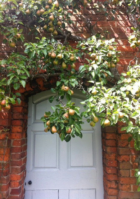 Pears by the door By Amanda Claire