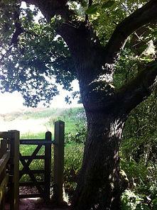 Oak & Gate by Amanda Claire Ancient & Sa