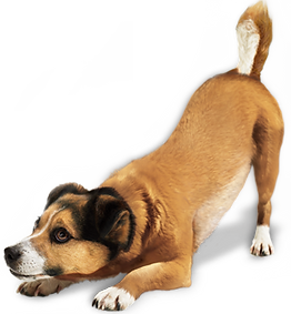 dog_PNG161.png