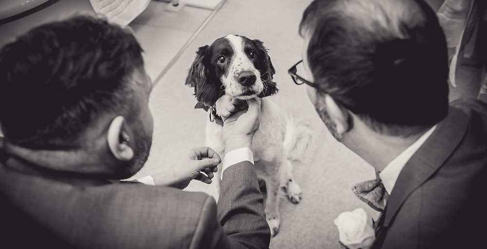 Dogs at Weddings Lincolnshire