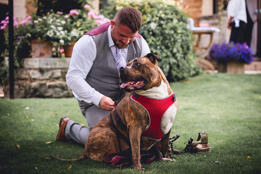Dog Bridesmaid Getting Ready