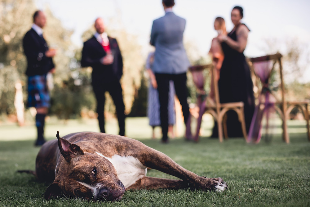 Weddings can be exhausting