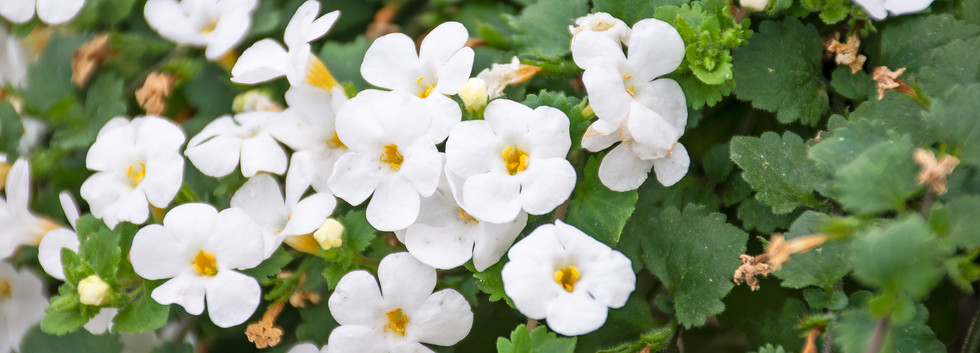 Flowers 12.jpg