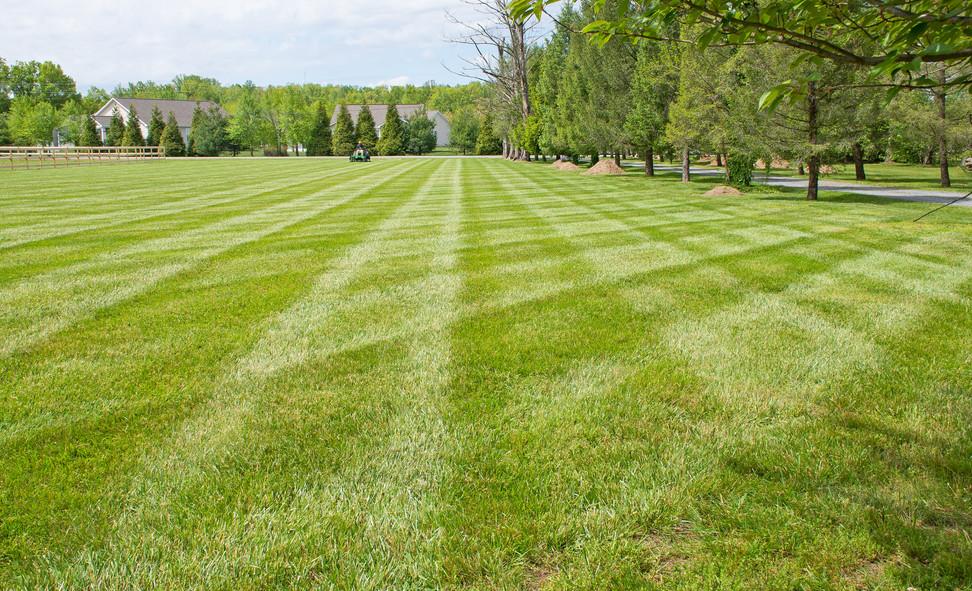 Grass 5.jpg