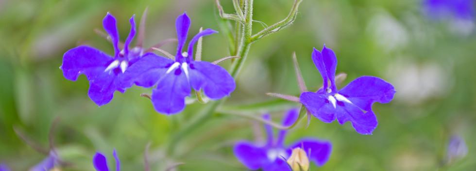 Flowers 13.jpg