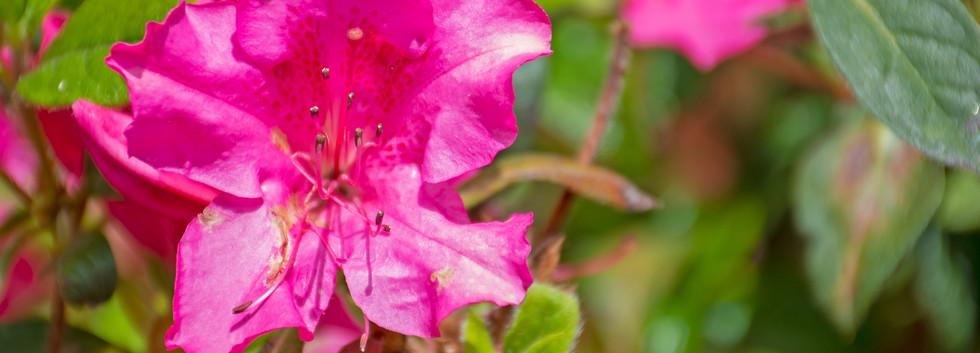 Flowers 17.jpg