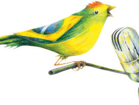 Desenho Original para Rolando Boldrin